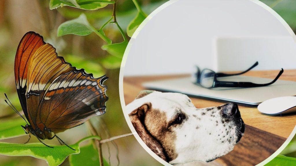 Butterfly and loyal dog buyer behavior segmentation