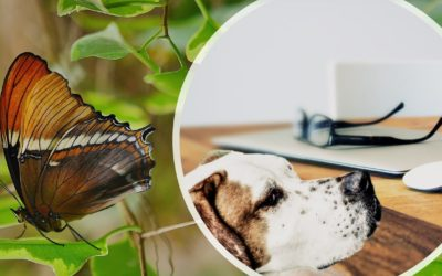 Digital Marketing Strategies for Butterflies and Loyal Dogs